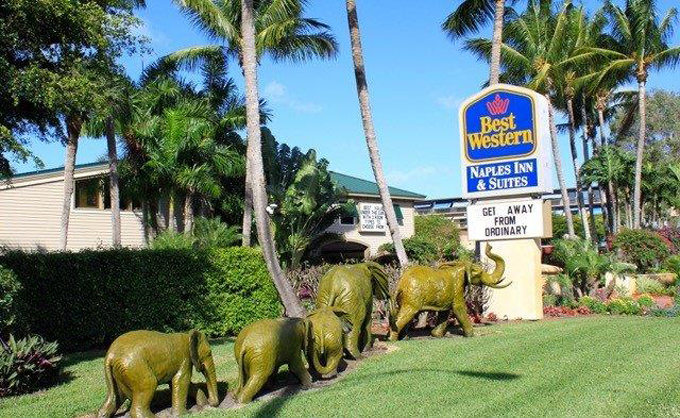 Airport Shuttle To And From Naples Best Western Plaza Hotel In Near Florida